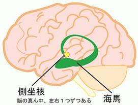 3.脳は「快」に向かって行動す...